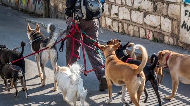 paseos para perros