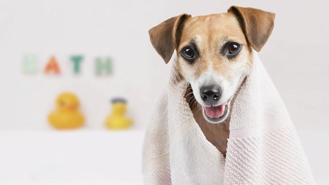 spa para mascotas