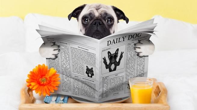 10 ideas de negocios sobre mascotas