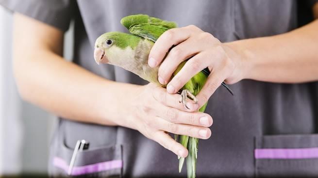 veterinaria especializada en aves y mascotas exóticas